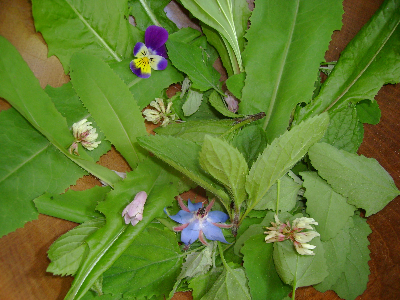 Hawthorn Herbals, Tamara Segal RH